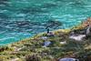 Canada Goose - Point Lobos #6809