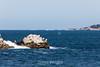 Whale Spout & Pinnacles - Point Lobos #6886
