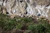 Seagulls - Point Lobos #6758