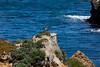 Canada Goose - Point Lobos #7119