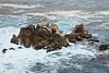 Bluefish Cove - Point Lobos #8252