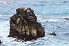 Bluefish Cove - Point Lobos #8224