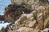 Bluefish Cove - Point Lobos #8112