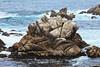 Bluefish Cove - Point Lobos #8226