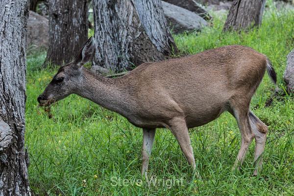 Point Lobos 5-31-2014