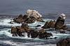 Bluefish Cove - Point Lobos #3841