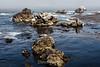 Bluefish Cove - Point Lobos #3793