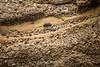 Sandstone Concretions - Point Lobos #4022