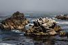 Bluefish Cove - Point Lobos #3801