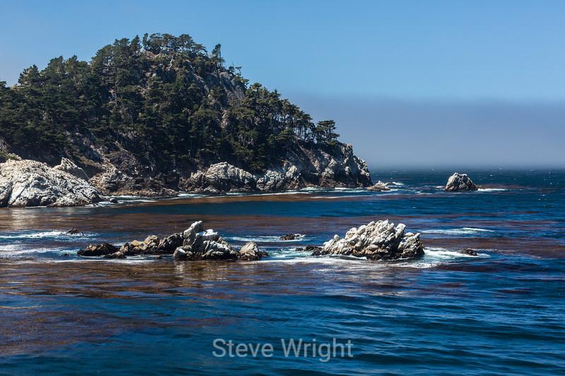 Canary Point - Point Lobos #5083