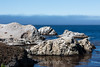 China Cove - Point Lobos #4791