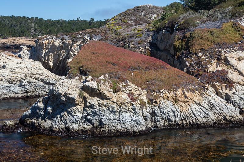 China Cove - Point Lobos #4855