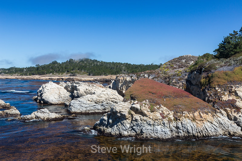 China Cove - Point Lobos #4859
