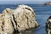 Point Lobos (40) D