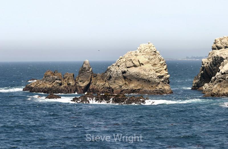 Point Lobos (129) D
