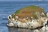 Point Lobos (24) D
