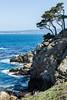 Canary Point - Point Lobos #1712