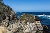 Canary Point - Point Lobos #1693