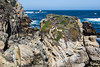 Canary Point - Point Lobos #1694