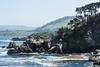 Canary Point - Point Lobos #1716