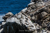 Cormorants - Point Lobos #1749