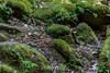 Mossy Rocks - Uvas Canyon Park #3888