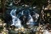 Little Falls - Uvas Canyon Park #3871