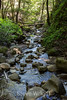 Swanson Creek - Uvas Canyon Park #3852