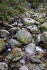Swanson Creek - Uvas Canyon Park # 3784