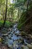 Swanson Creek - Uvas Canyon Park #3856