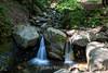 Swanson Creek - Uvas Canyon Park #3865