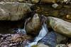 Swanson Creek - Uvas Canyon Park #3858