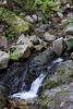 Swanson Creek - Uvas Canyon Park # 3824