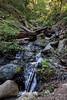 Swanson Creek - Uvas Canyon Park # 3821