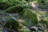 Mossy Rocks - Uvas Canyon Park #3882