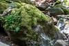 Mossy Rocks - Uvas Canyon Park #3911