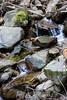 Swanson Creek - Uvas Canyon Park #3840