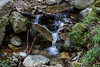 Swanson Creek - Uvas Canyon Park # 3831