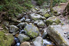 Swanson Creek - Uvas Canyon Park # 3783