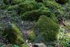 Mossy Rocks - Uvas Canyon Park #3886