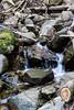 Swanson Creek - Uvas Canyon Park #3844
