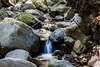 Swanson Creek - Uvas Canyon Park #4073