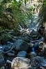 Swanson Creek - Uvas Canyon Park #4045