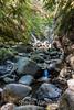 Swanson Creek - Uvas Canyon Park #4049