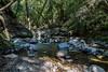 Swanson Creek - Uvas Canyon Park #4053