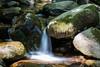 Swanson Creek - Uvas Canyon Park #4080