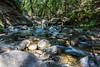 Swanson Creek - Uvas Canyon Park #4067