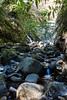 Swanson Creek - Uvas Canyon Park #4043