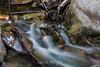 Swanson Creek - Uvas Canyon Park #4059