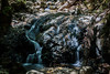 Little Falls - Uvas Canyon Park #4125